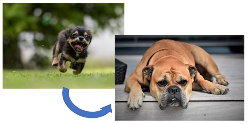 Na jednej strane natešený psík , nadruhej veľký znudený pes